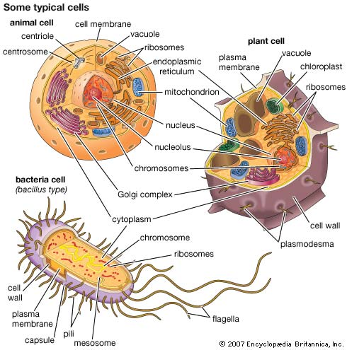 biology science cells - photo #2