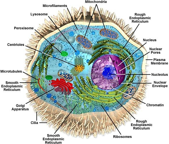 biology science cells -#main